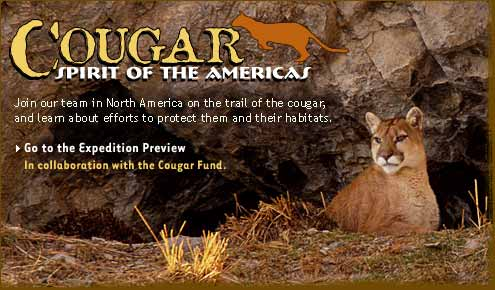 Cougar: Spirit of the Americas